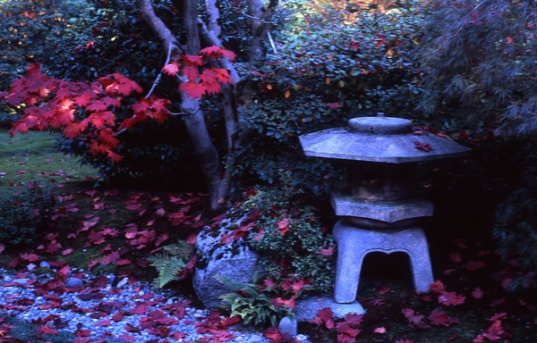This photo was taken in the Japanese Garden in Seattle, Washington with a 6 x 7 Pentax.