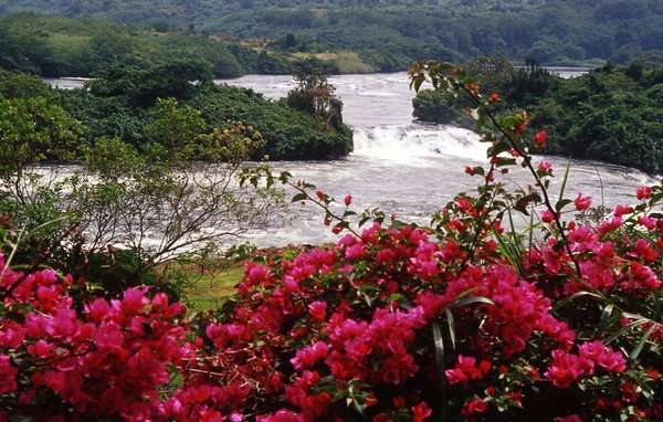 Bujagali Falls and Bougainvillea on Nile River, Jinja, Uganda