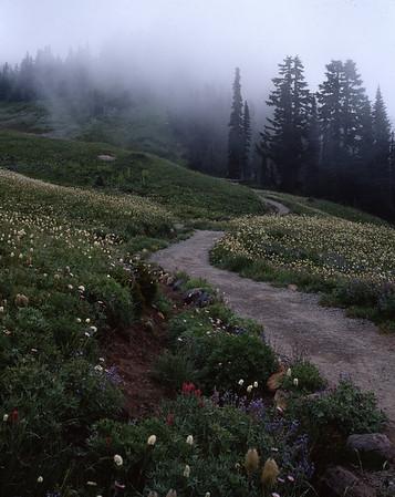 Trail, Wildflowers, and Fog, Mt. Rainier NP, Washington