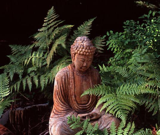 Photo of Buddha and ferns in Shoreline, Washington