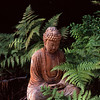 Photo of Buddha and ferns in Shoreline, Washington