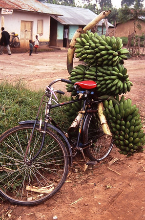 Matoke on Bicycle, Uganda