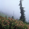 Pink Flowers, Tree, and Fog, Mt. Rainier NP, Washington