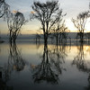 Lake Nakuru Reflections