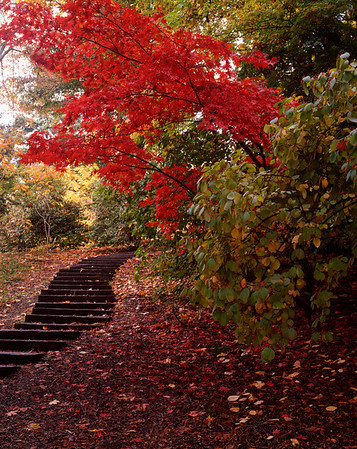 Steps and Red Leaves