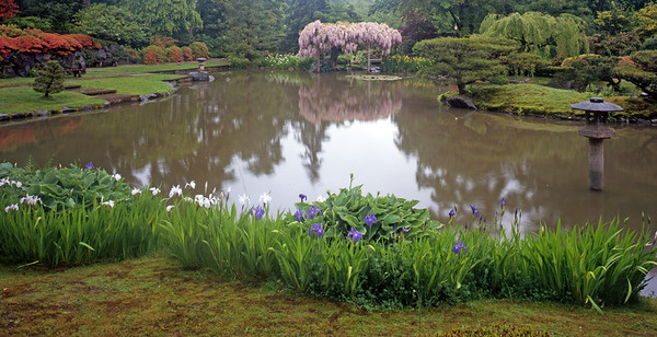 Purple Flowers, Wisteria Tree, Japanese Lantern and Reflecting Pond