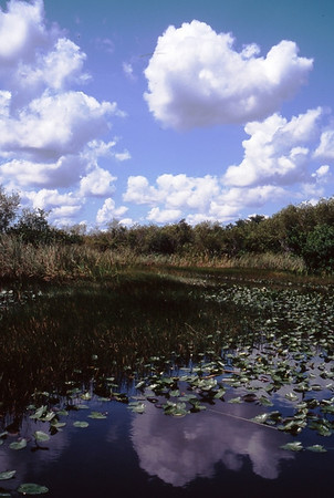 This photo was taken in The Everglades National Park, Florida from an airboat.  The foliage in the mid ground is sawgrass, and water liillies are in the foreground.