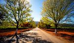 Road to Rubicon Estate