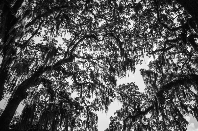 Moss Above