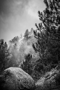 Foggy Days - BW
