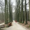 Zoniënwoud nabij Tervuren