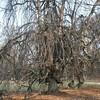 Bijzondere boom in park Den Brandt