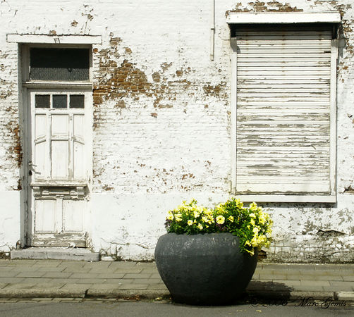 There is some incongruity between the abandonned house and the flowers, which are still taken care off.