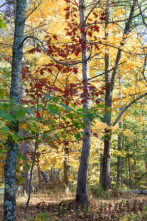 Fall colors at Itasca State Park, Minnesota