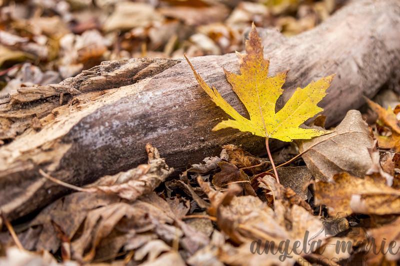 Splash of Fall Color