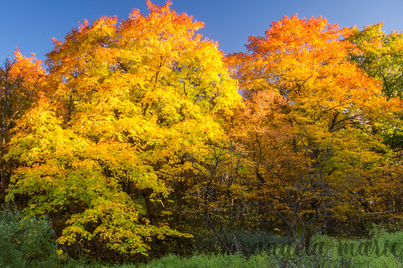 Fall colors at Sica Hollow State Park in South Dakota