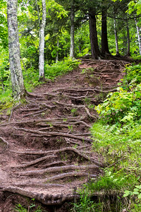 Tree Root Stairway by Nawadaha Falls on the Presque River in Michigan