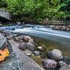 Leaf Resting by Minnehaha Creek