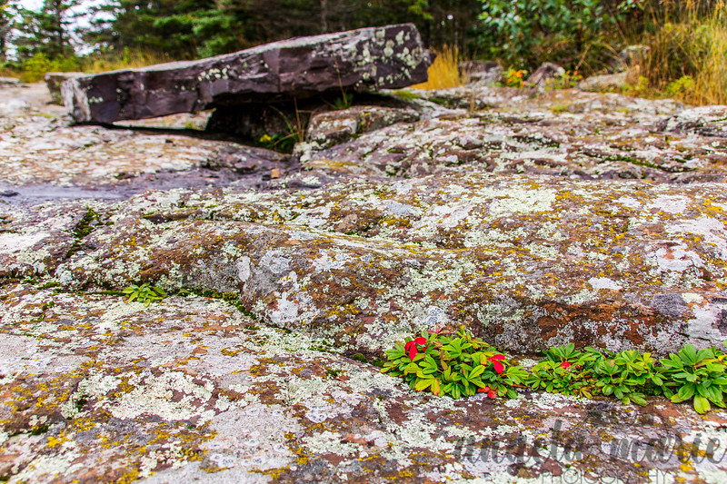 Rocks and plants near Split Rock Lighthouse