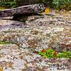 Rocks and plants near Split Rock Lighthouse