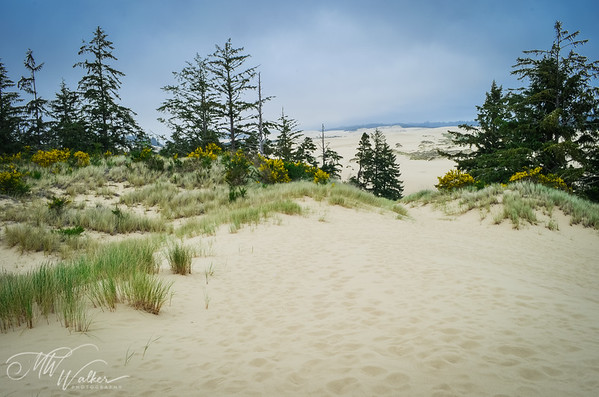 Endless Sand Dunes, Oregon National Recreation Area