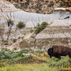 Bison and Badlands Formations - Theodore Roosevelt National Park, ND