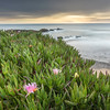 Pescadero  Beach Spring Blooms