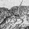 Tree in thermal pool runoff