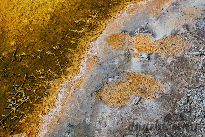 Bacterial Mat Closeup