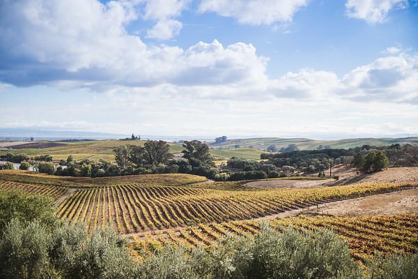 Rolling Napa Vineyards