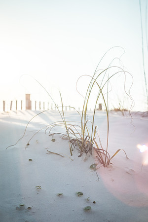 Wisps of Beach Grass