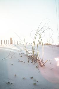 Wisps of Beach Grass