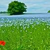 Flax (Vlas) Sint-Truiden