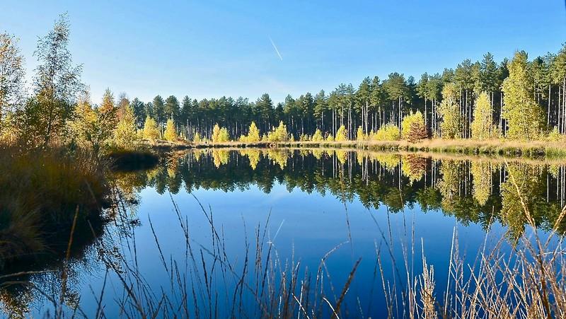 Bos en Heide Averbode