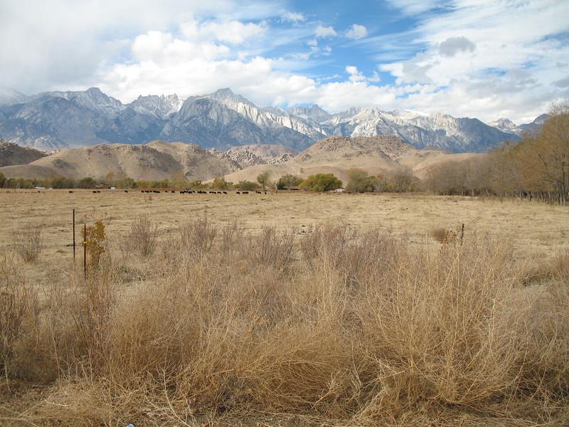 Eastern Sierra Pasture