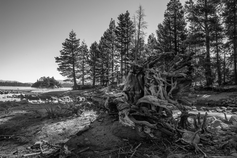 Uprooted Trunk, Emerald Bay