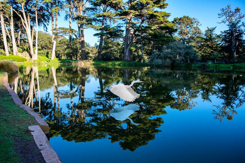 Metson Lake, Golden Gate Park