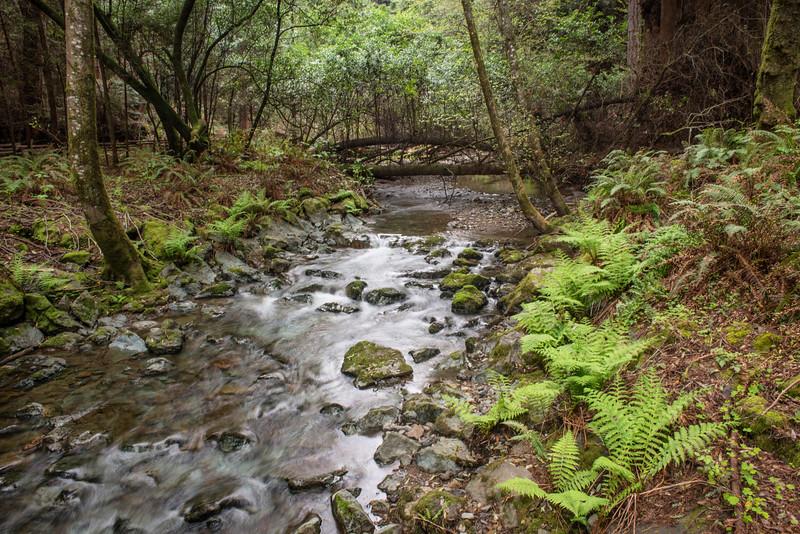 Muir Creek