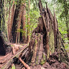 Muir Creek Trail