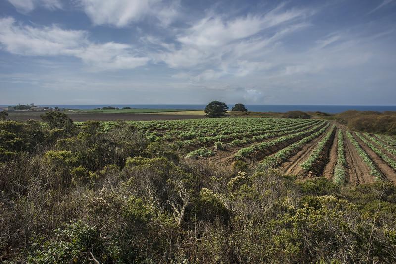 Coastal Agriculture