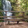 Viewing Platform, Berry Creek Falls