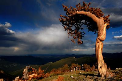 Photos of Trees