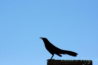 Black Bird_004