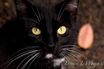 Black Cat Stinker_1417