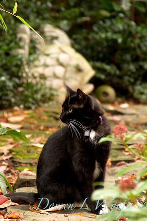 Black Cat Stinker_1974