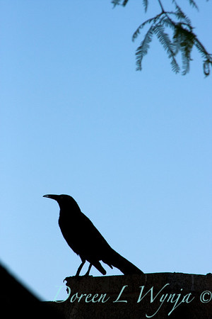 Black Bird_005