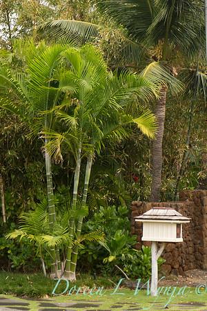 Dypsis cabadae - decorative mailbox_001