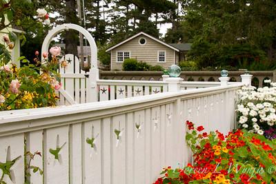 Fencing white Tropaeolum majus cottage garden_3647