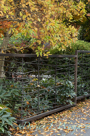 Custom metal fence - Helleborus fall landscape_5336