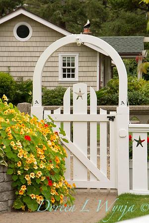 Tropaeolum majus White garden gate Cottage garden_3653